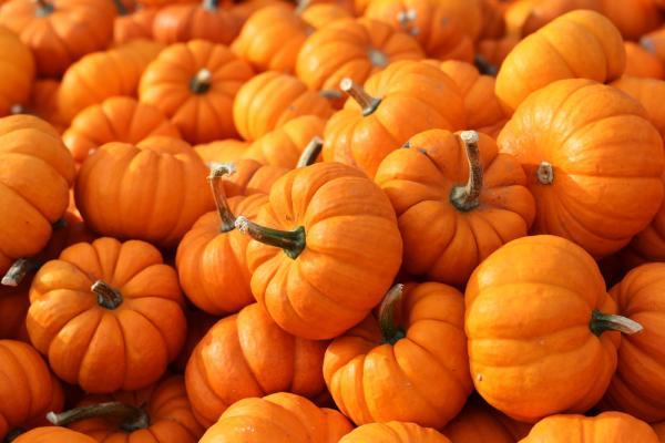 Thankgiving Pumpkin Food for Beautiful Skin